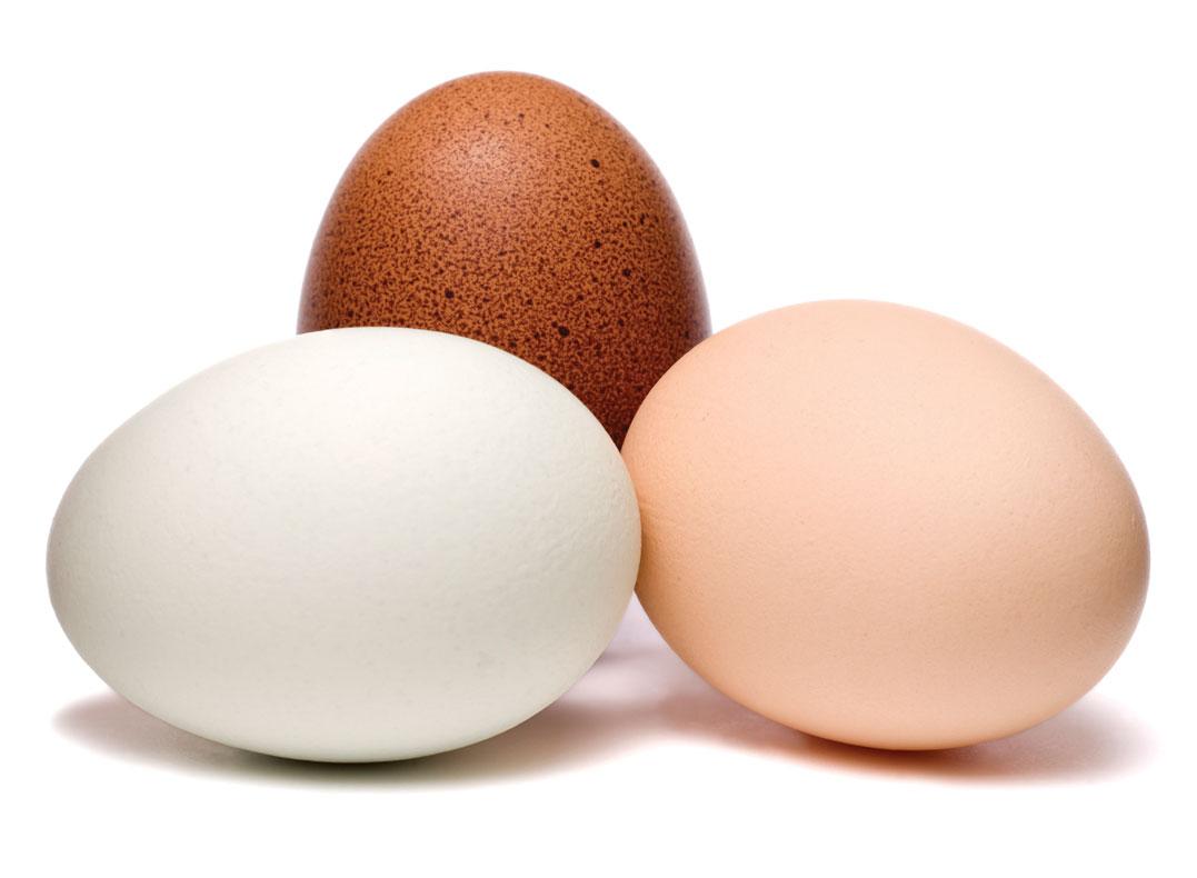 An Egg-cellent Fatloss Tool!